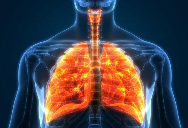 Ağciyərin sağlamlığını qoruyan qidalar. Diyetoloqun tövsiyələri