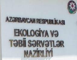 Ağac kəsən şəxs cəzalanıb