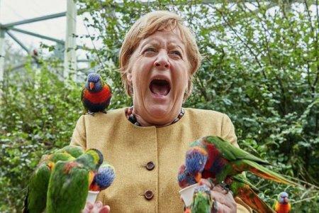 """Merkel parkda quşları bəsləyərkən tutuquşunun """"hücumuna"""" məruz qaldı"""